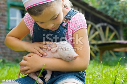 istock A girl holding a piglet 87336840