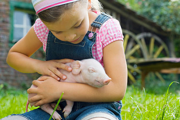 A girl holding a piglet stock photo
