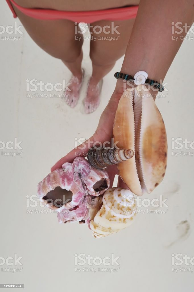 Girl holding different kinds of seashells on the beach zbiór zdjęć royalty-free