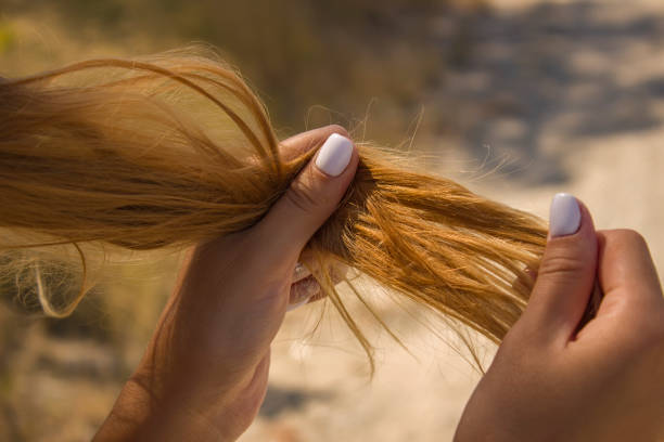 206 Split End Hair Stock Photos, Pictures & Royalty-Free Images - iStock