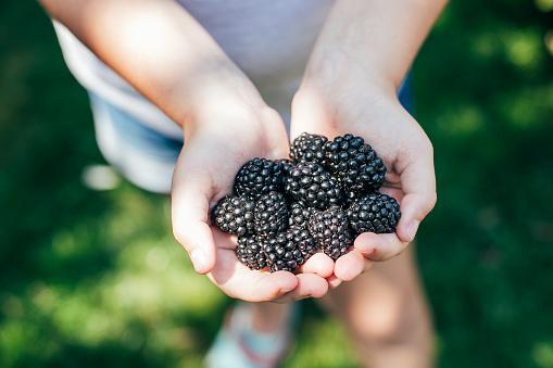 Girl Holding Freshly Picked Blackberries. Summer Berry Food