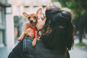 Girl walking on the street and holding her puppy Miniature Pinscher