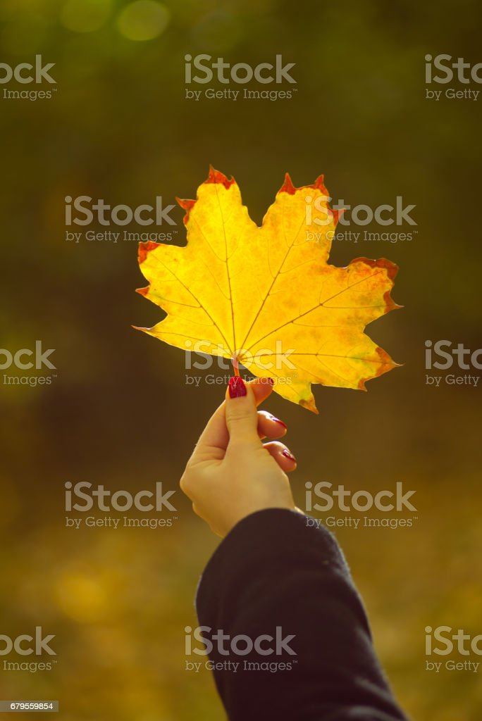 Girl holding maple leaf in autumn park stock photo