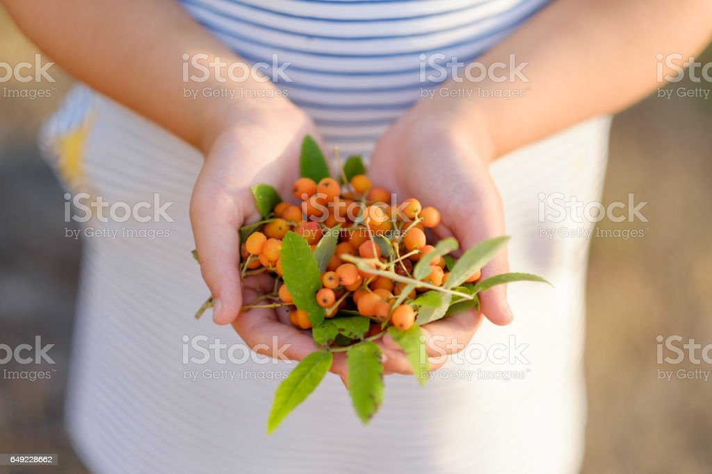 girl holding mountain ash berries in her hands stock photo