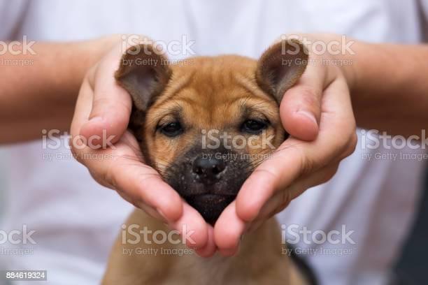 Girl holding puppy in her hands his face is sad and looking like picture id884619324?b=1&k=6&m=884619324&s=612x612&h=cv5ri2a2zhqdhmebsgzvhdglfa6i68s0engytpot6ek=