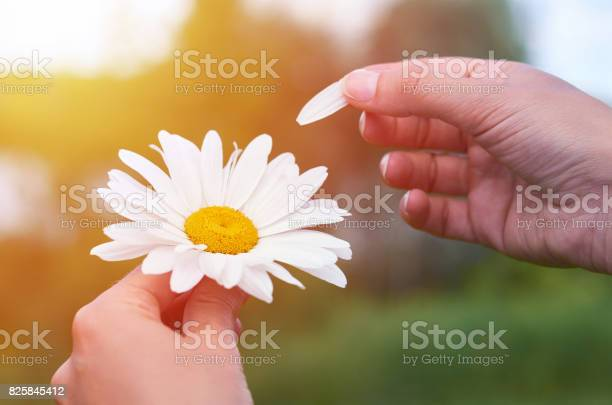 Girl holds a large white chamomile in the hands concept of and life picture id825845412?b=1&k=6&m=825845412&s=612x612&h=gloptevrffz8dvbh7miytlt1q7bz3 qgvzlgaraqtso=