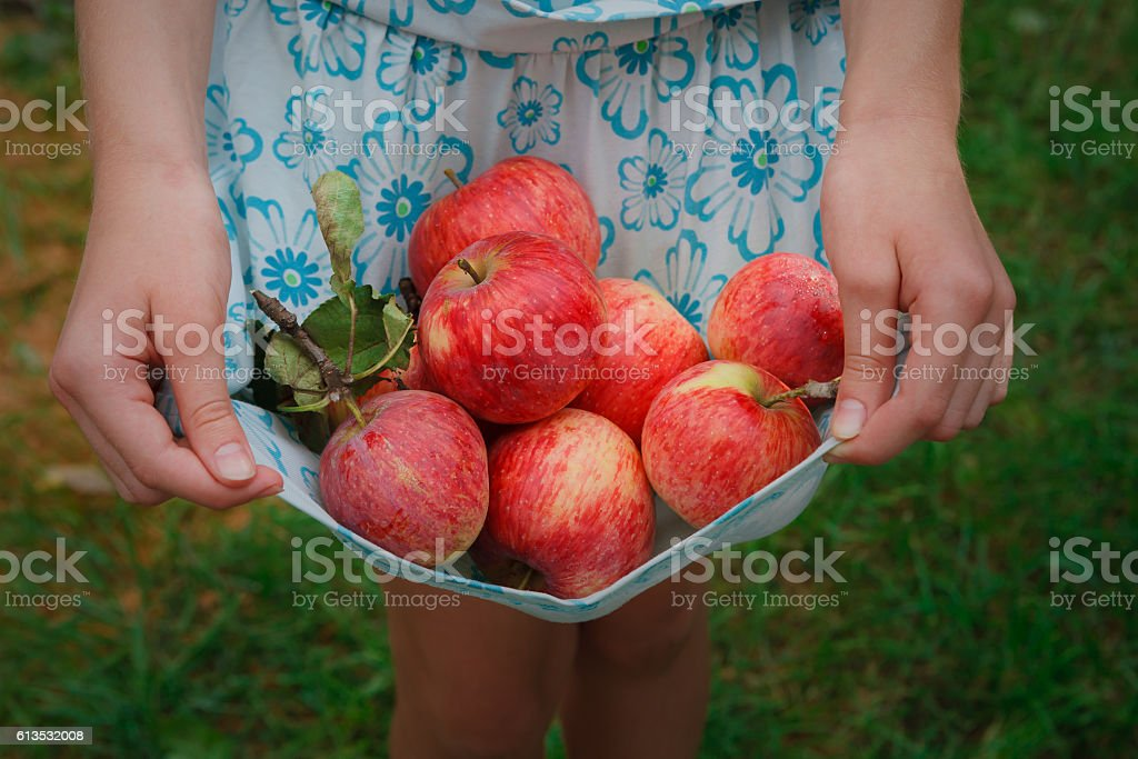 Girl holds apples in skirt hemline – Foto