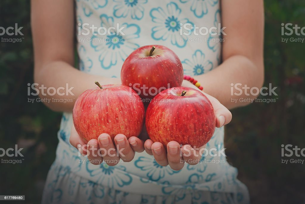 Girl holds red apples in hands, handful at torso background stock photo