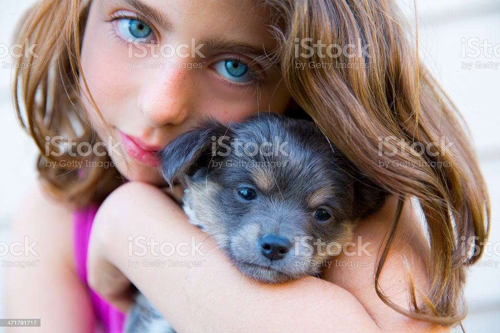 girl hug a little puppy dog gray hairy chihuahua royalty-free stock photo