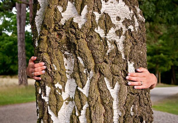 mädchen umarmen eine birke - eheringe öko stock-fotos und bilder