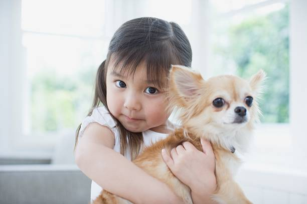 Girl hugging a chihuahua stok fotoğrafı