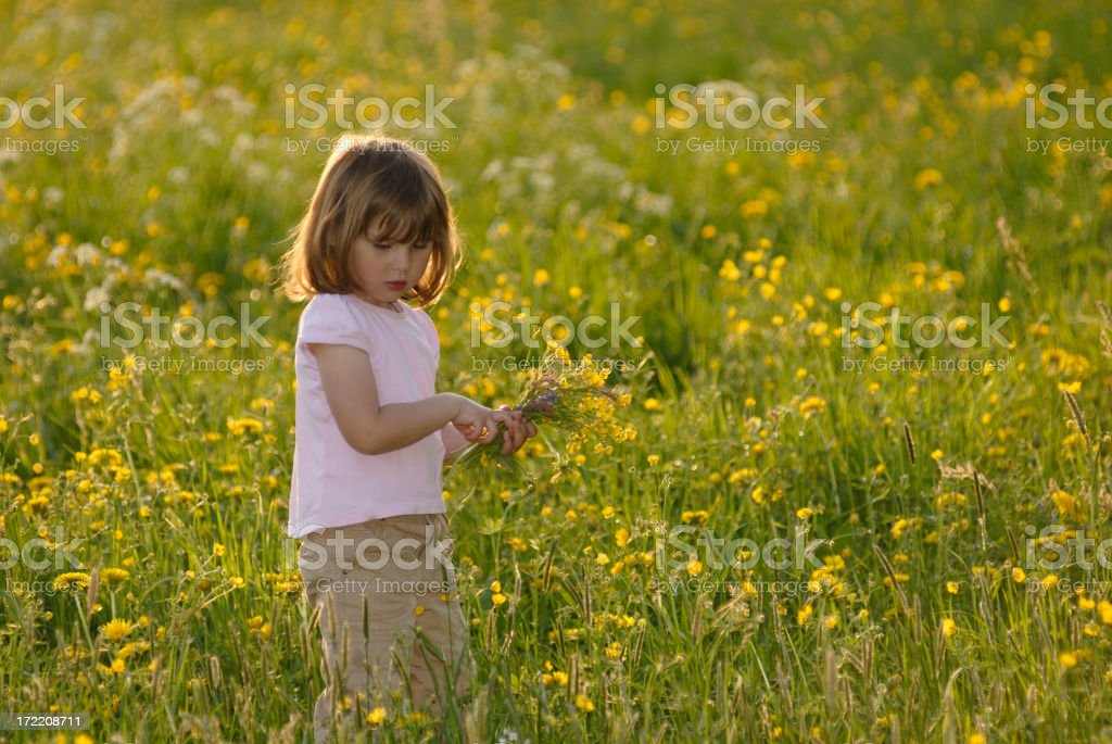 girl in a blooming meadow stock photo