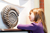 A young girl looks at an ammonite on display in a museum