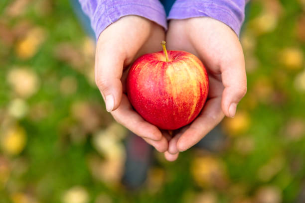 Girl in an orchard holding a red apple stock photo
