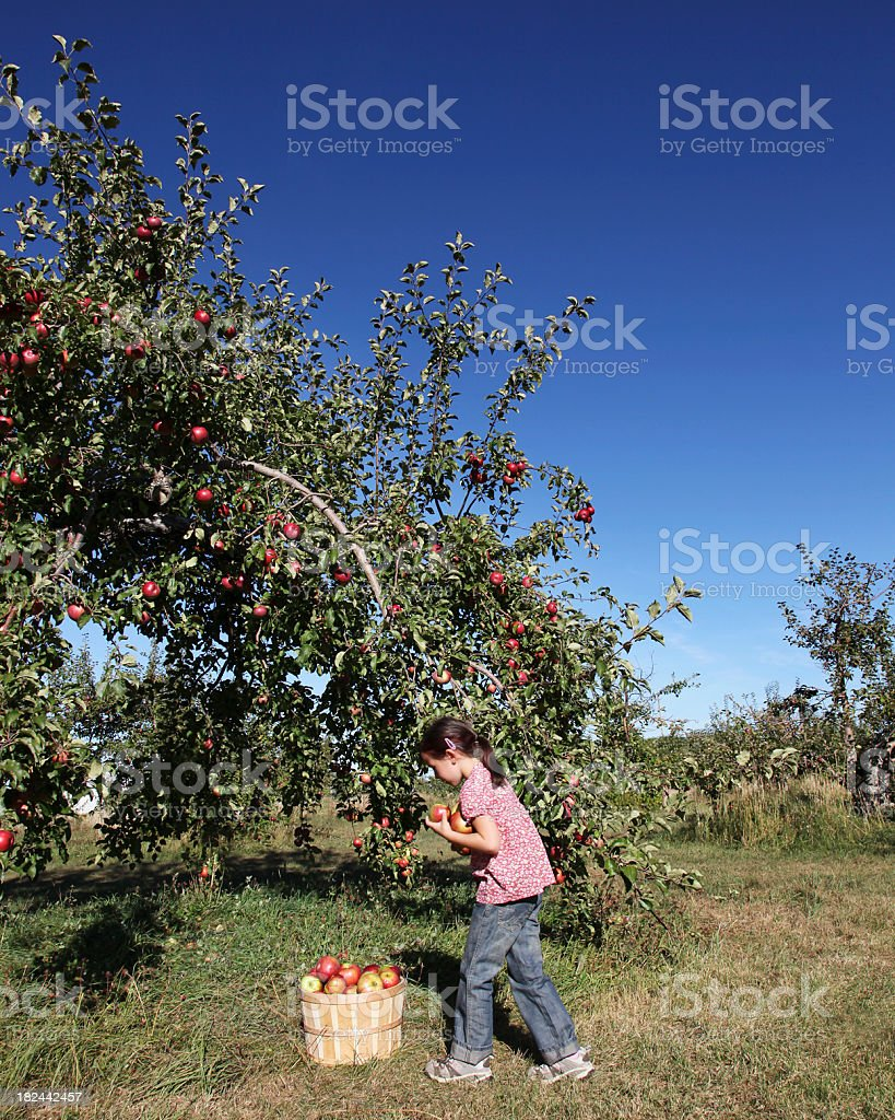 Girl in an orchard stock photo