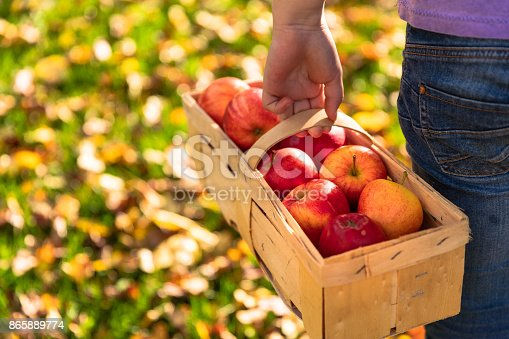 865889676 istock photo Girl in an orchard with basket and red apples 865889774