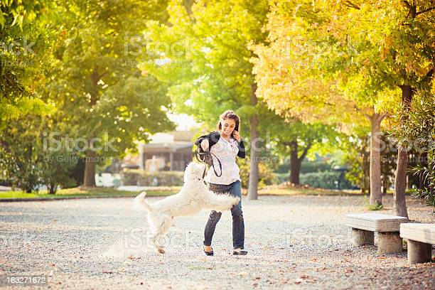 Girl in autumn running with a dog picture id163271672?b=1&k=6&m=163271672&s=612x612&h=wksrt5g6y0lxdhlrjflsezuiklyygxk2puazpsq  cy=