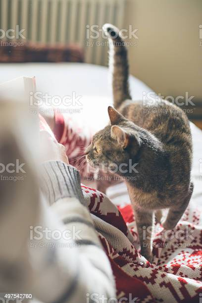 Girl in bed reading a book with her cat picture id497542760?b=1&k=6&m=497542760&s=612x612&h=jdb29k4yoqa5hxqxe9syzp2226zmby5otfoamleossc=