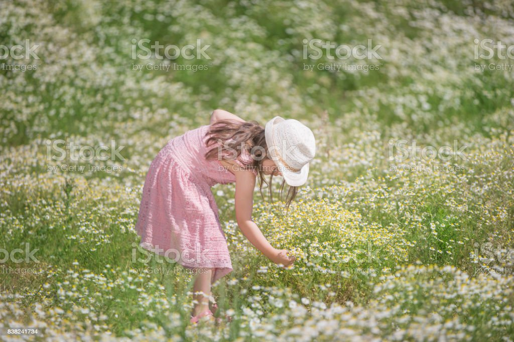 Girl in charmomile field stock photo