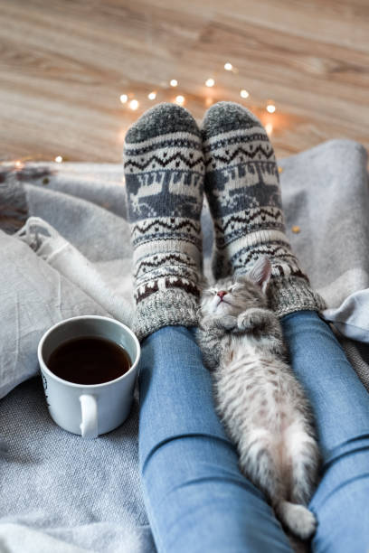 Girl in christmas socks sitting on a plaid with kitten picture id1049573880?b=1&k=6&m=1049573880&s=612x612&w=0&h=tsu6ikbudkexrq9nm51owwcqkpndnmtqxdmx8h9ozt0=