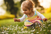 Toddler girl is crouching and picking flowers on a meadow.