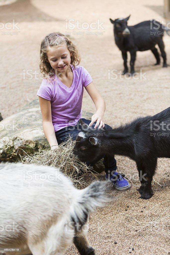 Girl in petting zoo royalty-free stock photo