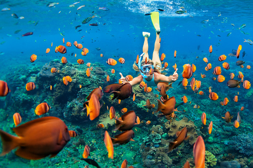 istock Girl in snorkeling mask dive underwater with coral reef fishes 689204952