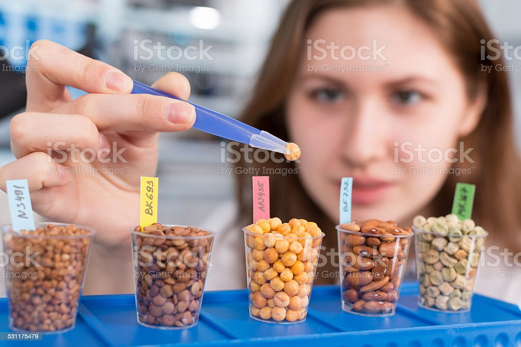 girl in the laboratory of food quality tests  legumes grain stock photo