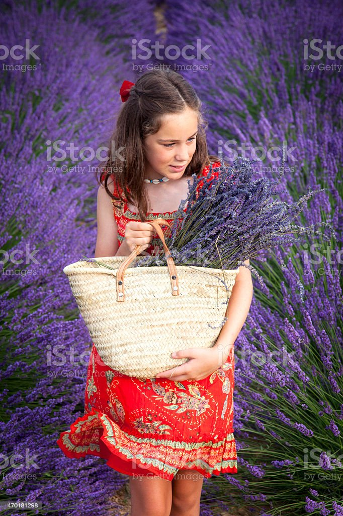 Girl in the lavender fields stock photo