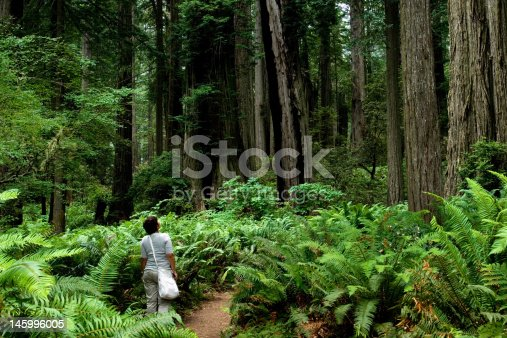 Girl hiking around relict sequoia trees in Redwoods National park, California