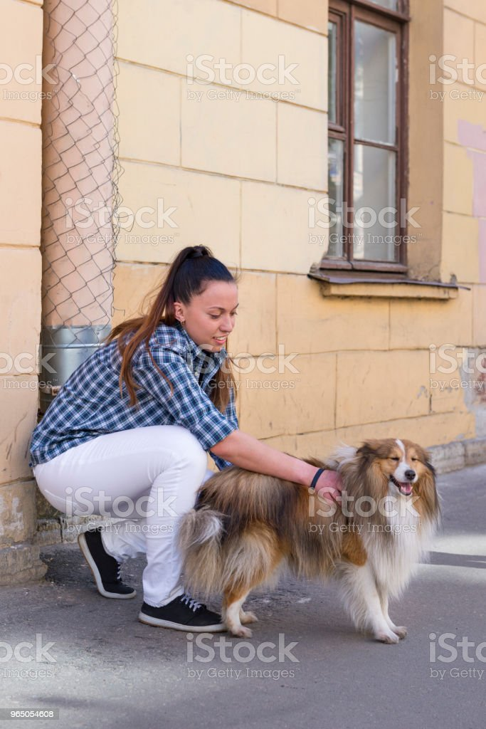 girl in white jeans stroking the dog shelty on the street outside the building zbiór zdjęć royalty-free