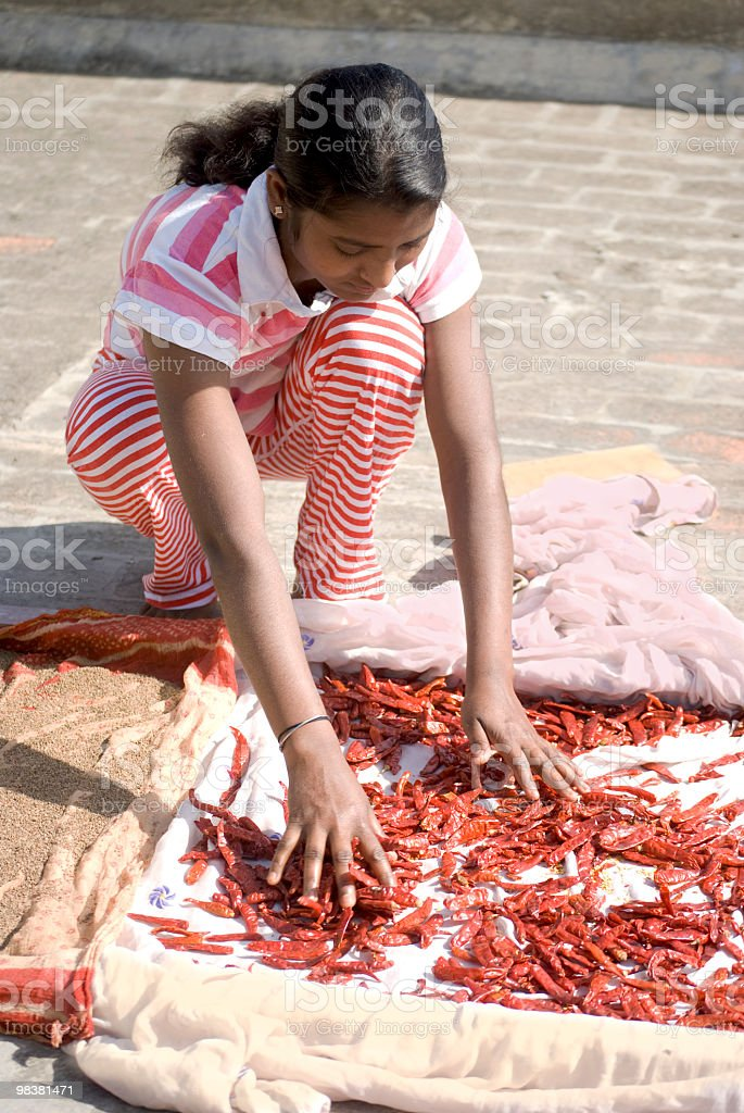 girl inspecting red chili peppers, India royalty-free stock photo
