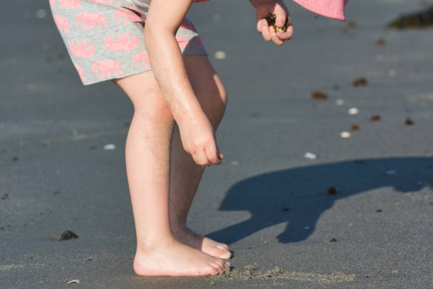 girl ipicking up shells on the beach - little girl picking up sea shells at the beach stock pictures, royalty-free photos & images