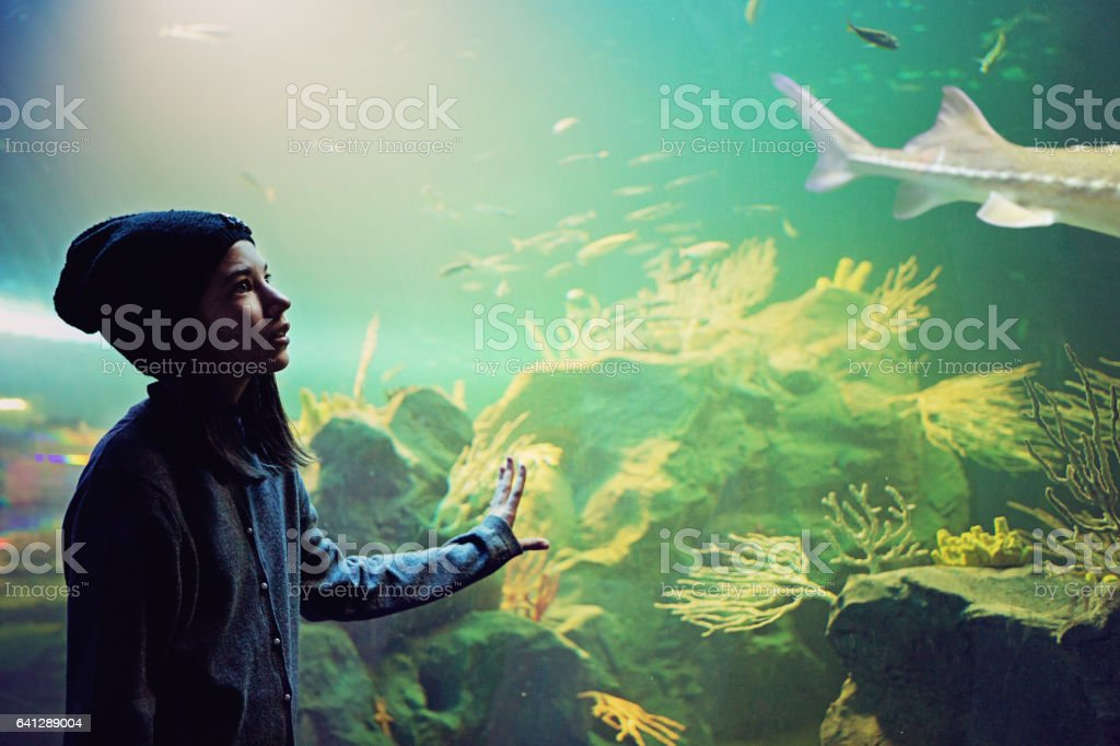Girl is looking beautiful reef aquarium stock photo