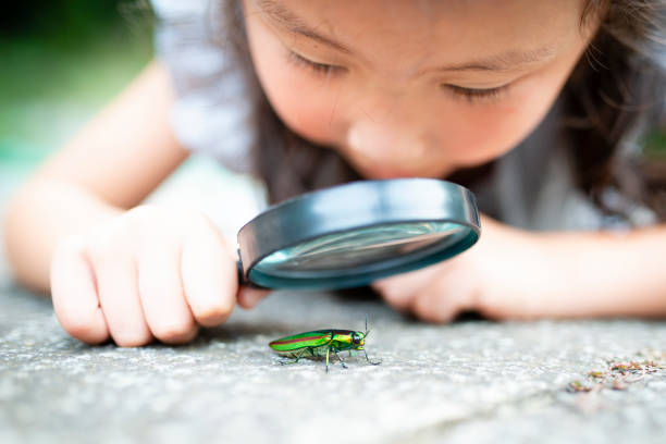 girl is watch a jewel beetle in the magnifying glass - insect stock pictures, royalty-free photos & images