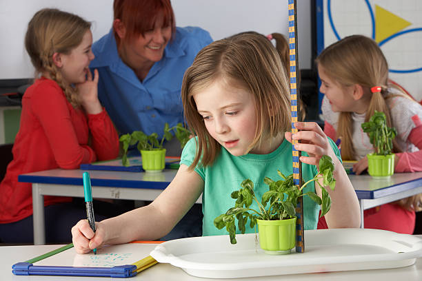 Girl learning about plants in school class stock photo