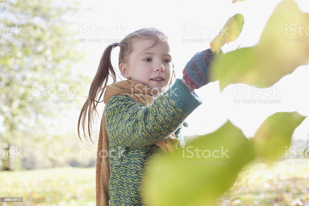 Girl looking at autumn hoja al aire libre foto de stock libre de derechos