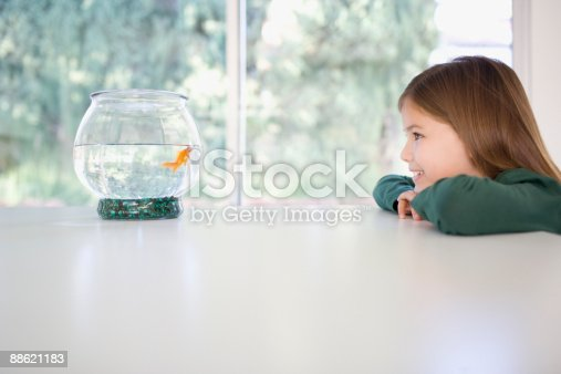109350576 istock photo Girl looking at goldfish in bowl 88621183