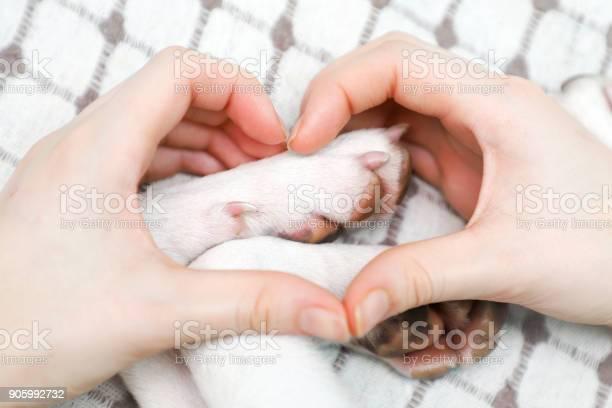 Girl making gesture heart from his hands on the dog paws background picture id905992732?b=1&k=6&m=905992732&s=612x612&h=mbitayrdkk8gtggmzjtftbrt7vxenxxq exnh ysbhg=