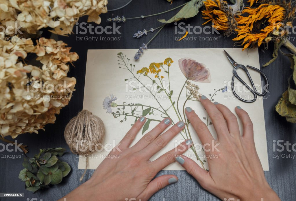 Girl making herbarium. Dried herbs and dried flowers for making herbarium stock photo