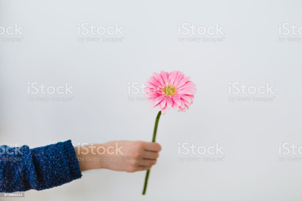 A girl offering a pink gerbera royalty-free stock photo