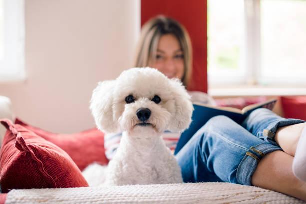 mädchen auf dem sofa mit ihrem hund-freund - humor bücher stock-fotos und bilder