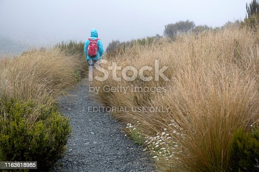Arthurs Pass, New Zealand - December 29, 2018. A girl on trail at Dobson Nature Walk in Arthur's Pass National Park, South Island, New Zealand.