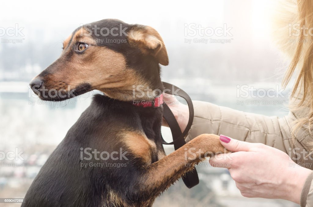 menina ou um mau dono assediando o cão ao ar livre - foto de acervo