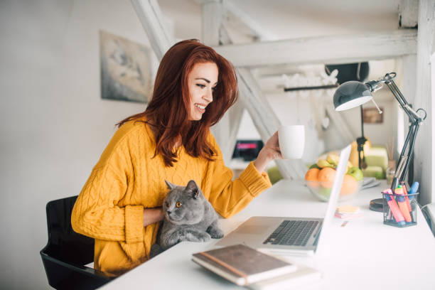 Girl petting cat and looking at laptop stock photo