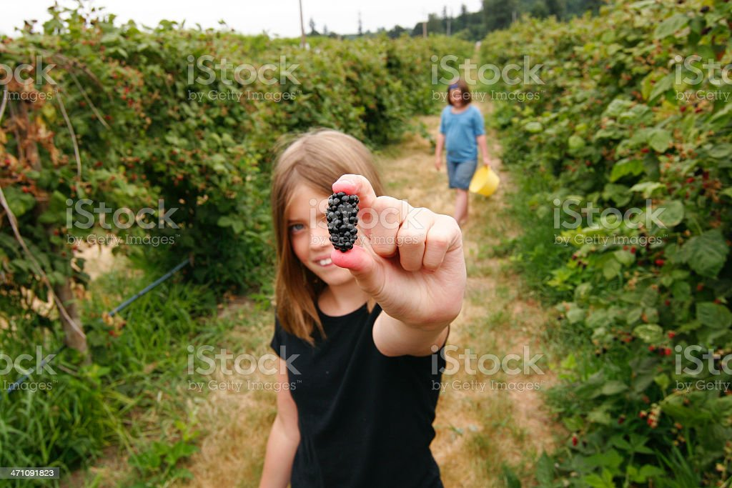 Girl Picking Blackberries royalty-free stock photo