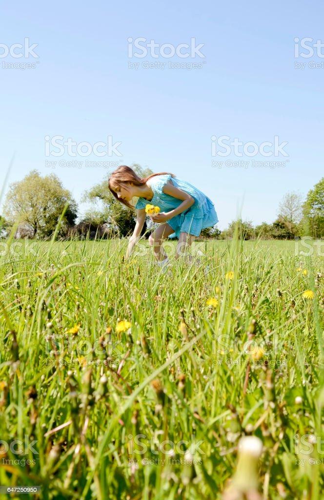 girl picking dandelions stock photo