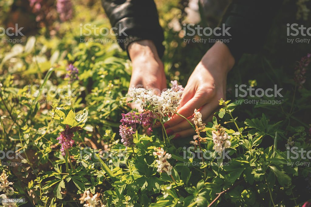 Girl picking flowers in a park. stock photo