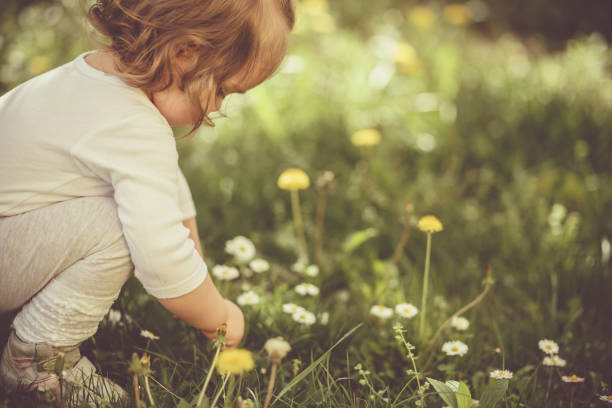 Girl picking flowers on a meadow stock photo