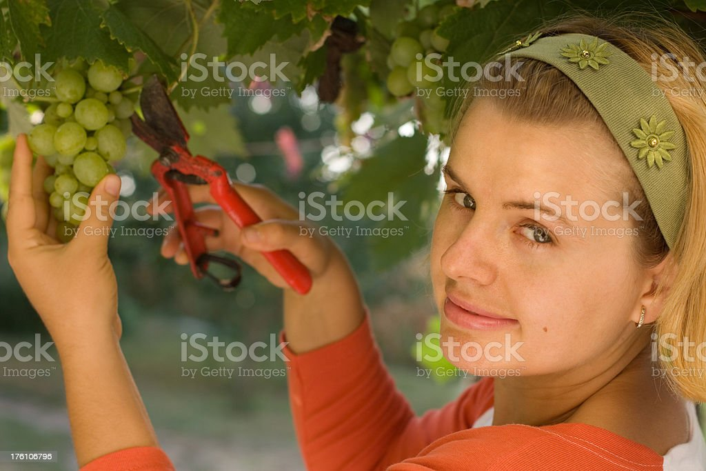 Girl picking grape royalty-free stock photo